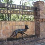 Botswana Safari Painted Dog Centre